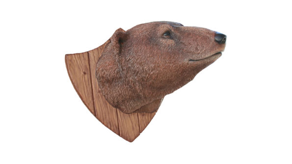 Grizzly bear Trophy head